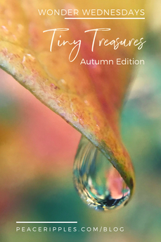 In Search of Tiny Treasures (Autumn Edition)