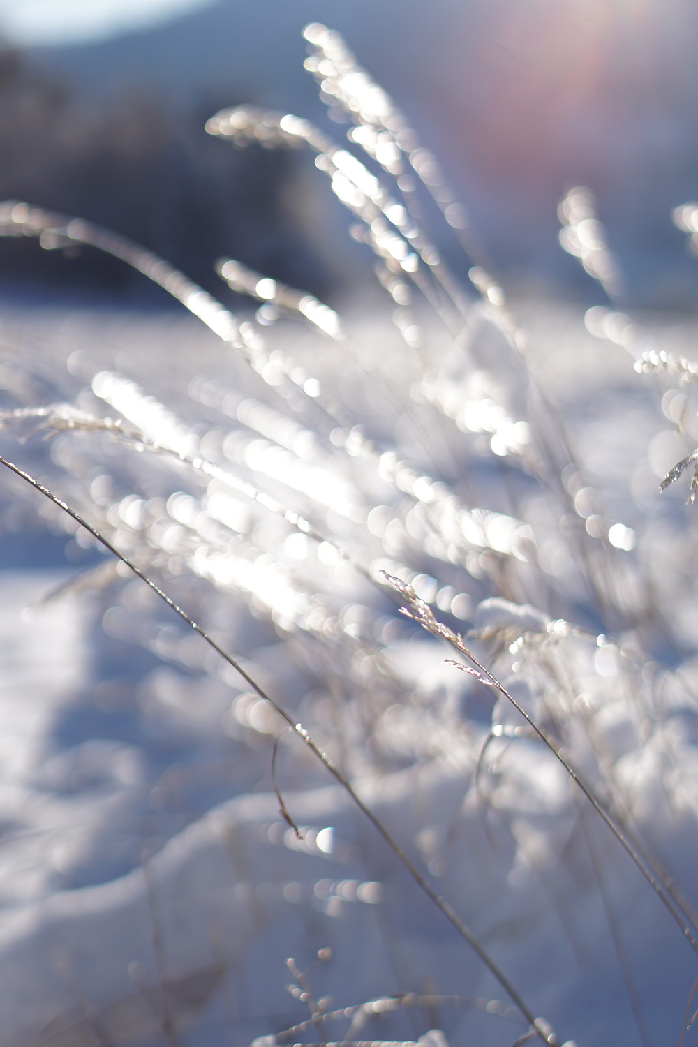 bokeh shallow depth of field snowy field sparkles