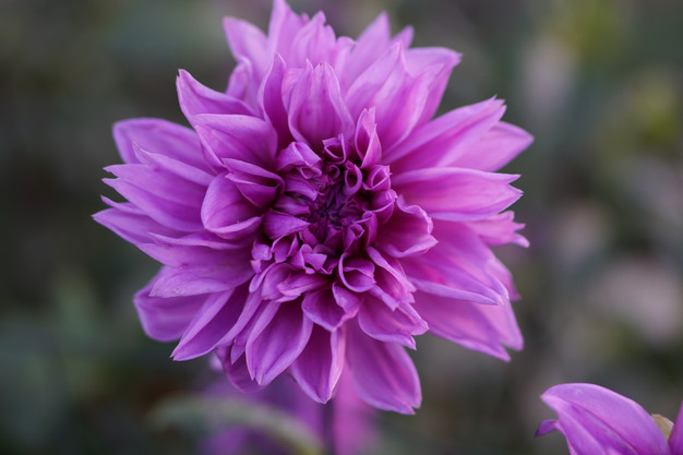 Creating Environments to Blossom
