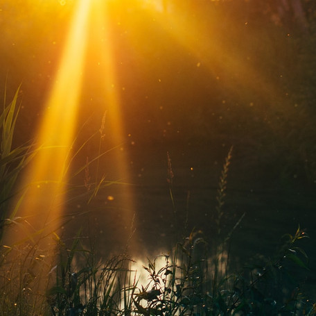 nature-sunset-water-sun-large.jpg
