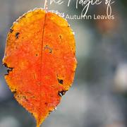 Autumn Leaves Magic