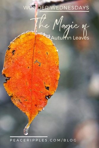 Autumn Leaves Magic
