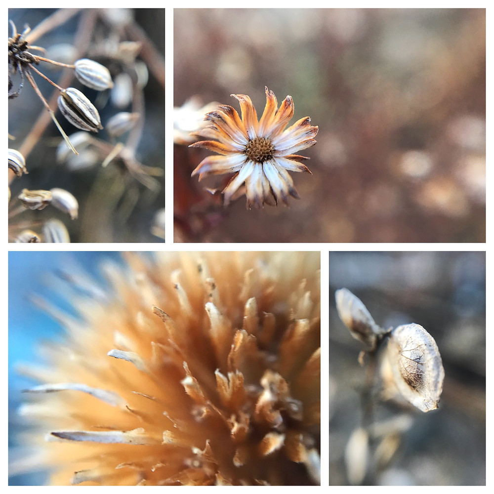 Awe-inspiring macro photo of winter dried flowers and seed pods