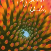 Tiny Summer Wonders