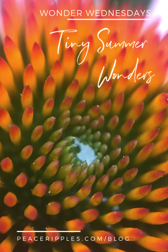 Tiny Summer Wonders