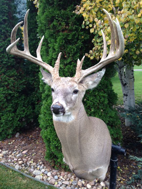 Colorado Eastern Plains Whitetail