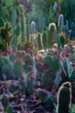 cactus love.jpg