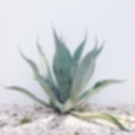sedona plant.jpg