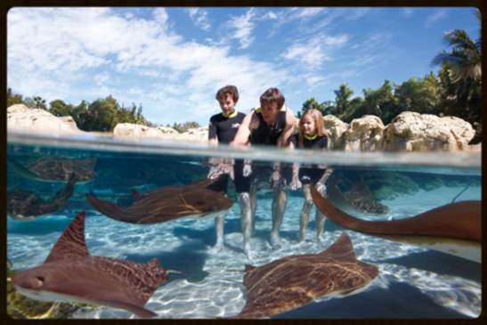 Discovery Cove Stingrays