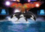 SeaWorld Shamu Show