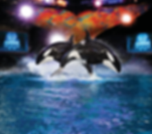 Cheap Tickets SeaWorld