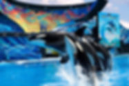 Discount SeaWorld Tickets