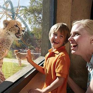 Busch Gardens Cheetah Run