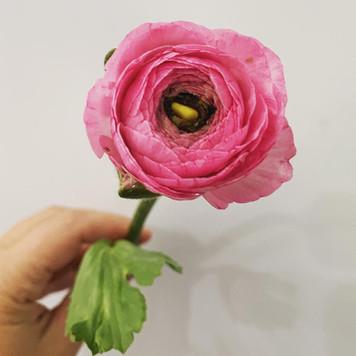 Spring Subscription Flower Close Ups