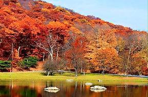 fall_scene.jpg