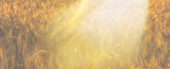Fields of Gold Embodied Poetry