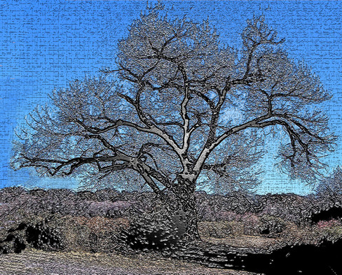 Bosque Tree