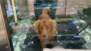 Hydrotherapy For Rehab and Conditioning.