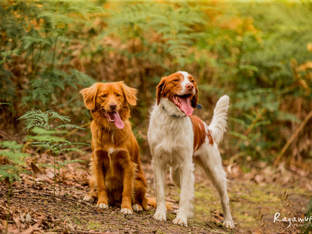 Enrichment and Mental Stimulation - The Secret To a Happy Dog