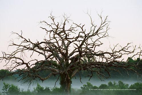Seffner Tree (12 x 18)