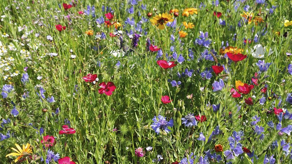 Butterfly & Hummingbird Garden Seed Mix