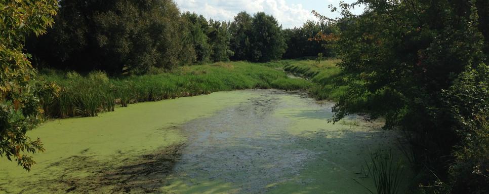 Stream & Wetland Restoration