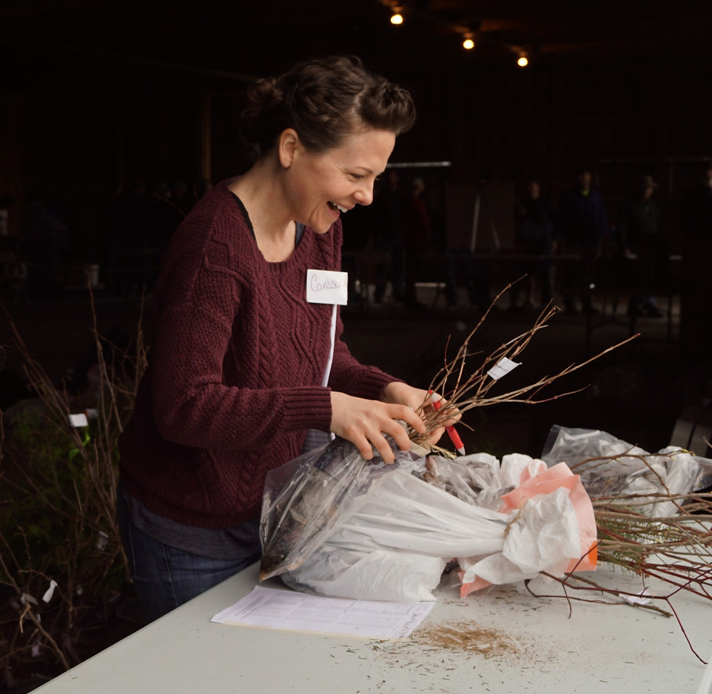Volunteer Carissa Stein packages an order of trees