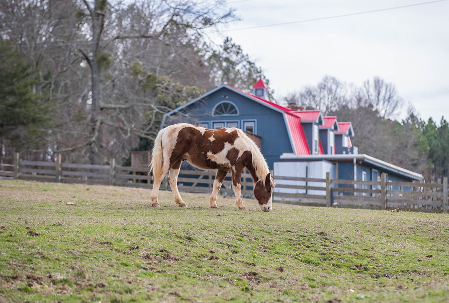The Academy at Double H Ranch horse and beloved red roof barn