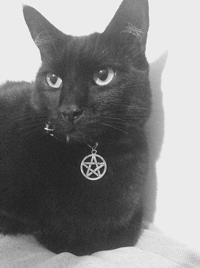 Cat Collar - Petagram
