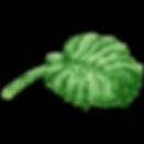 熱帯の葉6