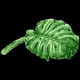 Tropical Leaves 6
