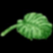 Folhas tropicais 6