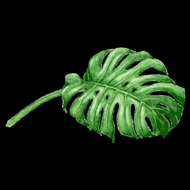 Тропические листья 6