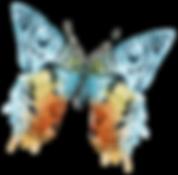 Aquarelle Papillon 13