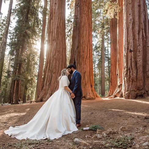 Giant Sequoia Trees-Christina Joy Photog