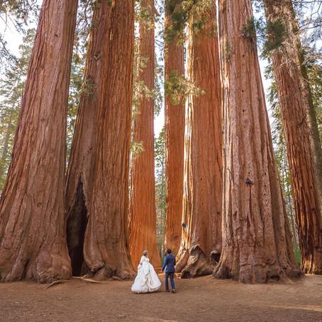 Crescent Meadow Elopement-Sequoia National Park Photographer