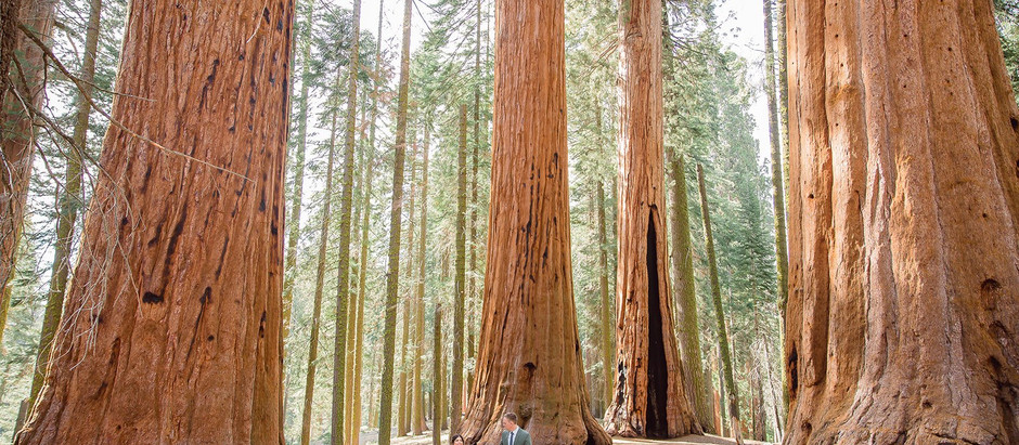 Sequoia National Park Engagement Session | Central Valley Photographer