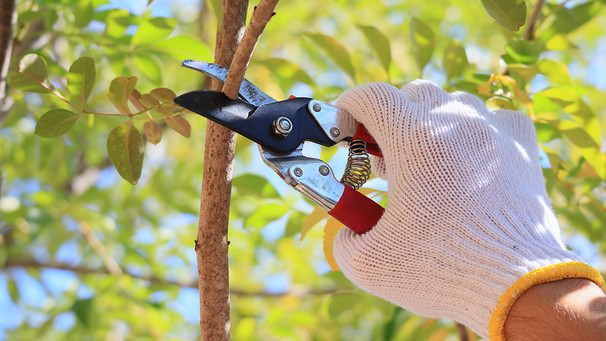 Hands-On: How and When to Prune Our Trees & Shrubs of Southern California