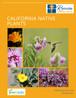 V2 CA Native Booklet Cover-1.jpg