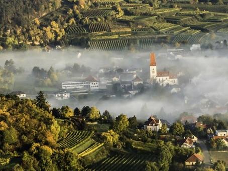 Tom Dockner - nachhaltiger Weinbau mit Leidenschaft