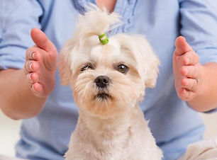 holistic natural therapies treatments pets animals wales