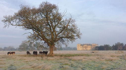 Croome-cattle-frost1-720x400.jpg