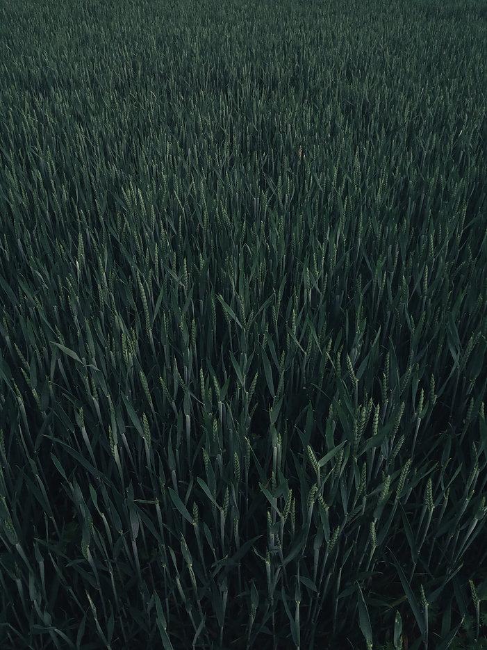 pexels-kei-scampa-4380187.jpg