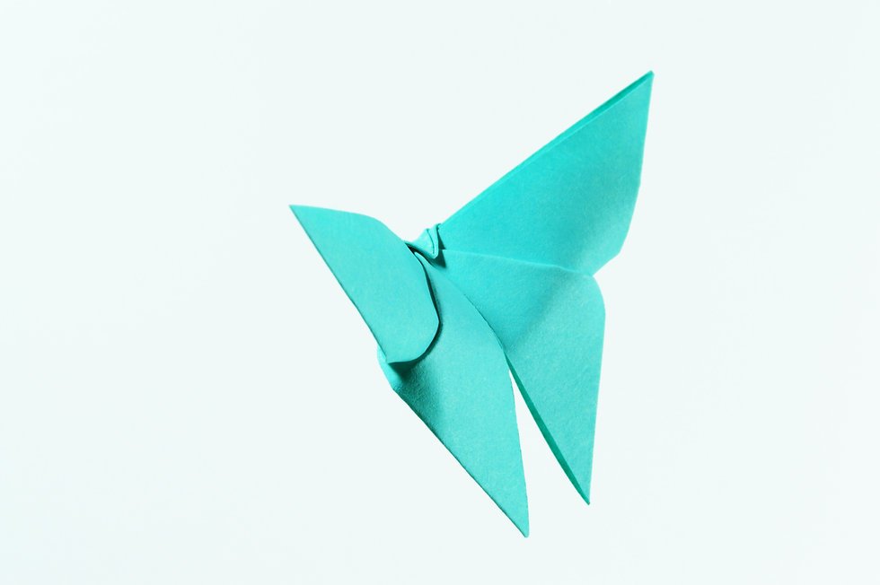 art-asian-butterfly-color-114977 (1).jpg