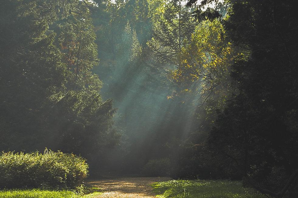 landscape-sun-trees-path-21008.jpg