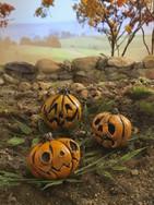 Miniature Pumpkin Patch