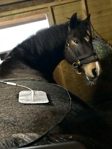 electr horse .jpg