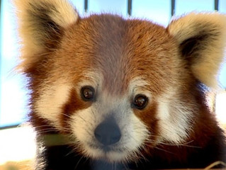 5 Reasons Exotic Animals Are Not Pets