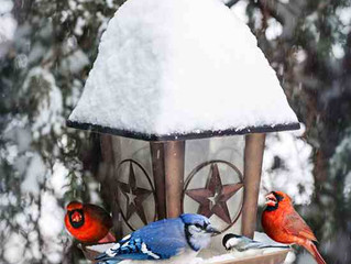 February is Bird Feeding Month