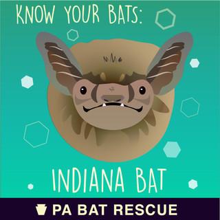 Bat-Detail-pa_Indiana Bat.jpg